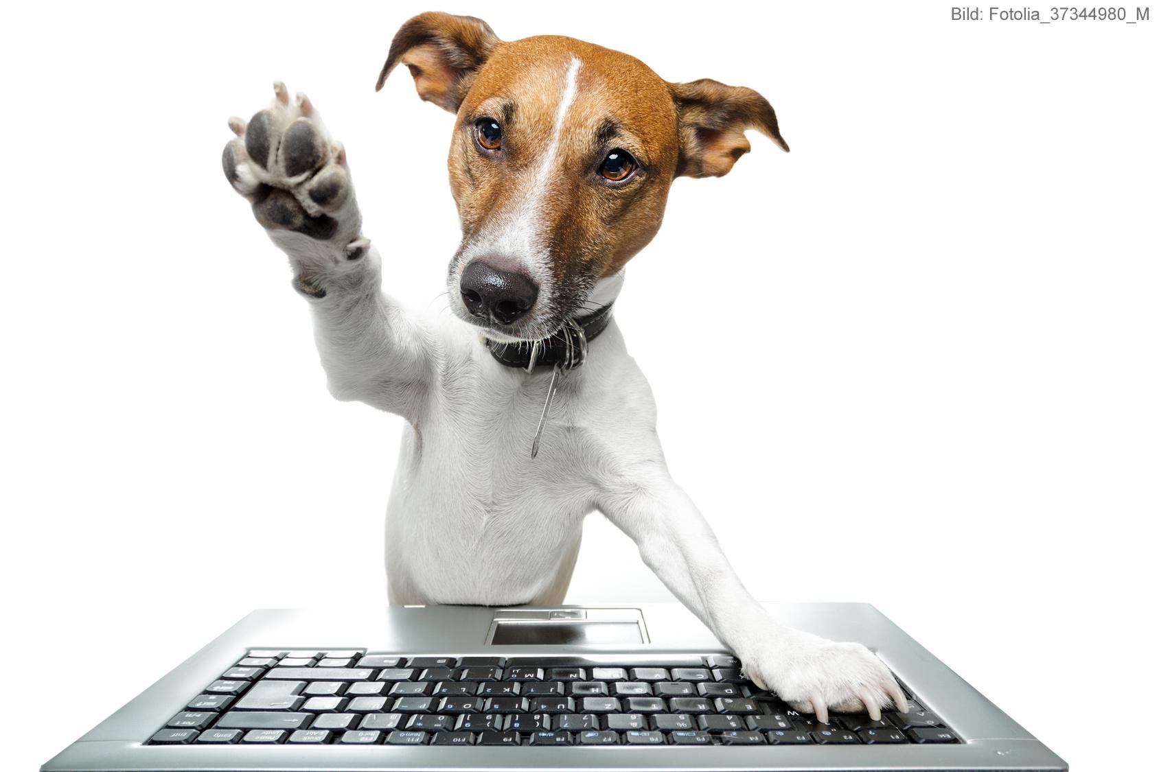 Hund am PC - Daten ade